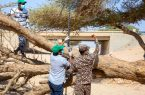 """بالفيديو .. """"الأمن البيئي"""" ينقذ شجرة طلح معمّرة جرفتها السيول بالثمامة"""