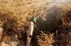 """""""البيئة"""": أكثر من 140 فرقة ميدانية تكافح أسراب الجراد الصحراوي في """"عسير"""""""