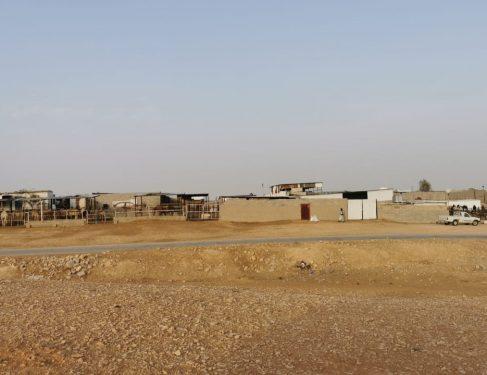 «بلدي الرياض» يوصي بالتنسيق مع «البيئة» لإيجاد موقعين لأسواق الإبل بالرياض